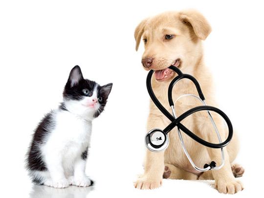 experto_seguros-mascotas