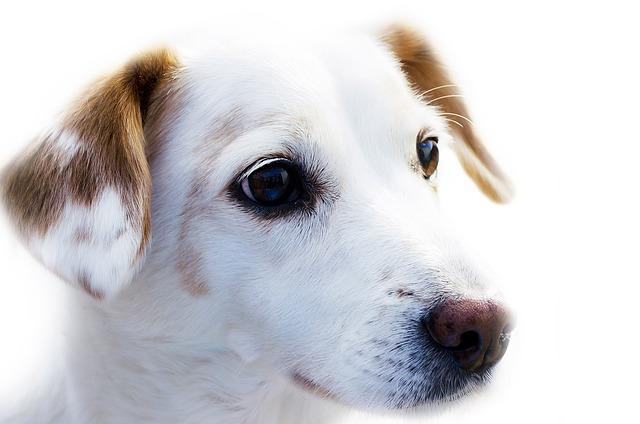 comparador-de-seguros-de-mascotas